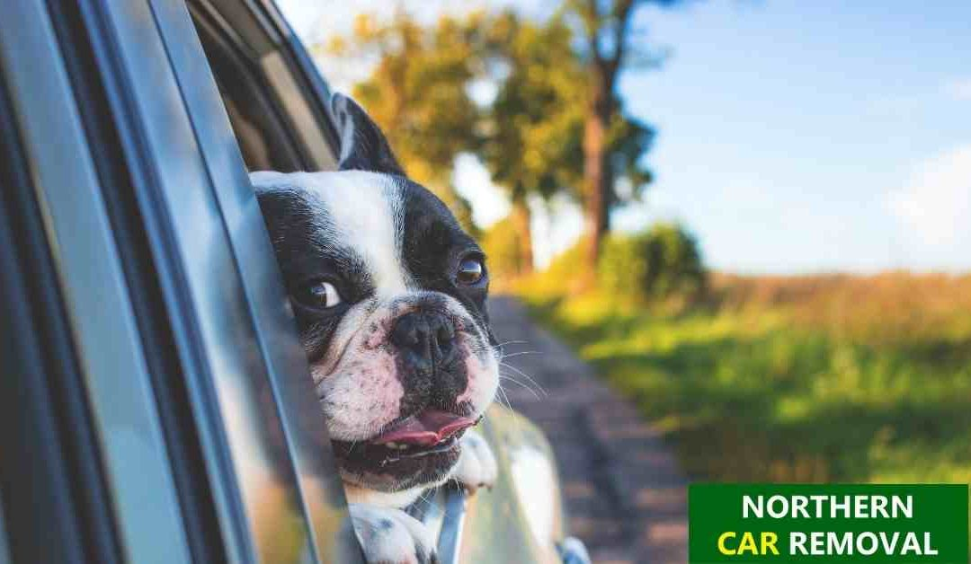 Tips for a Great Road Trip with Pets
